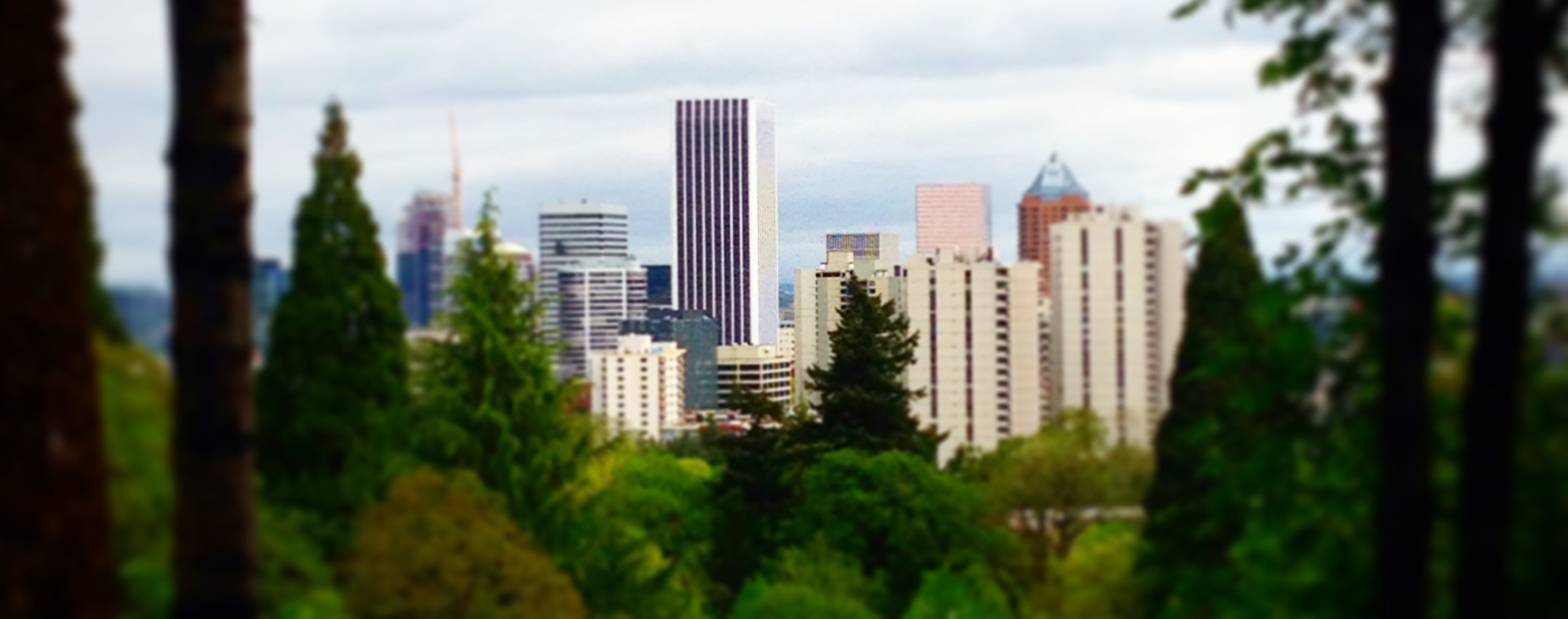 View of Portland through the trees